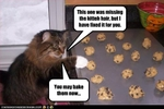 funny-pictures-cat-helps-bake-cookies
