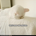funny-pictures-cat-hides
