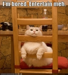 funny-pictures-cat-is-bored