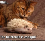 funny-pictures-cat-is-confused-by-hedgehog