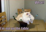 funny-pictures-cat-is-not-on-table