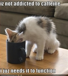 funny-pictures-cat-loves-coffee