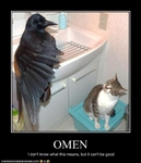 funny-pictures-cat-sees-an-omen