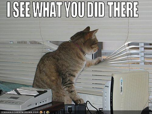 funny-pictures-cat-sees-what-you-did