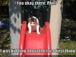 funny-pictures-cat-sends-friend-down-slide