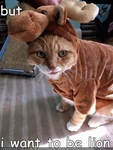 funny-pictures-cat-wants-to-be-lion