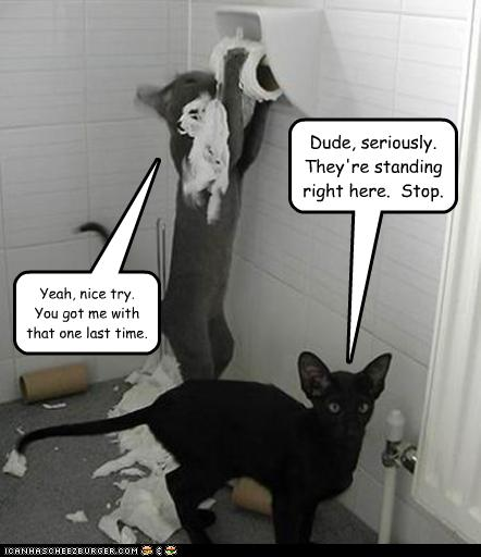 funny-pictures-cats-shred-toilet-paper