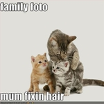 funny-pictures-cats-take-photo