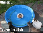 funny-pictures-cats-think-about-entering-pool1