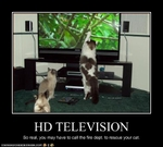funny-pictures-cats-watch-tv