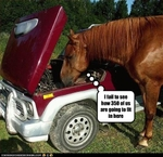 funny-pictures-horse-looks-at-engine