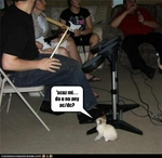 funny-pictures-kitten-requests-song