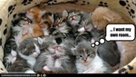 funny-pictures-kitten-wants-own-room