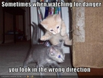 funny-pictures-kitten-watches-for-danger
