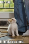 funny-pictures-kitten-will-climb-you