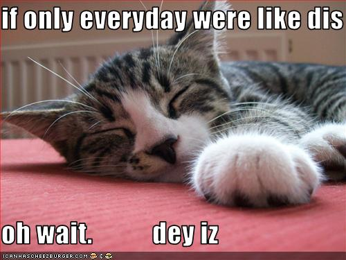 funny-pictures-lazy-cat-naps