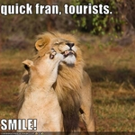 funny-pictures-lions-smile-for-tourists