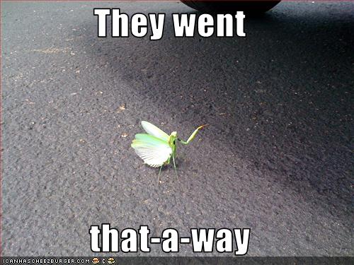 funny-pictures-mantis-gives-directions