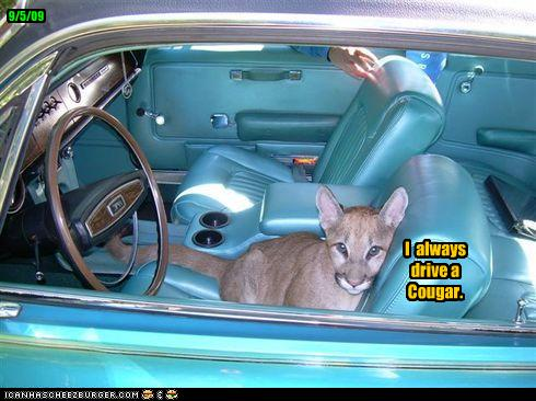 funny-pictures-you-drive-a-cougar